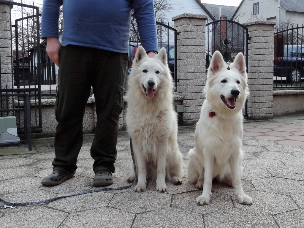 Invincible Zente Lords of the White Sheperd x Chilly of White Eagle