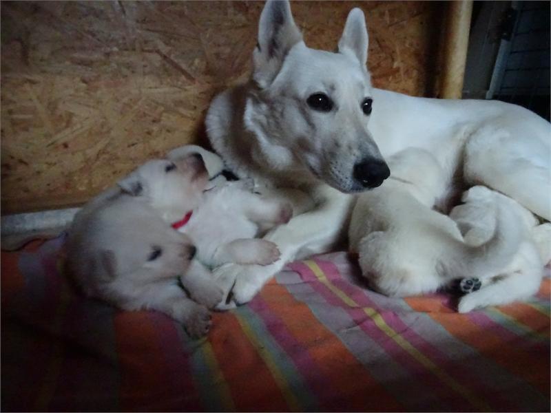 wachsame Hundemutti Diva