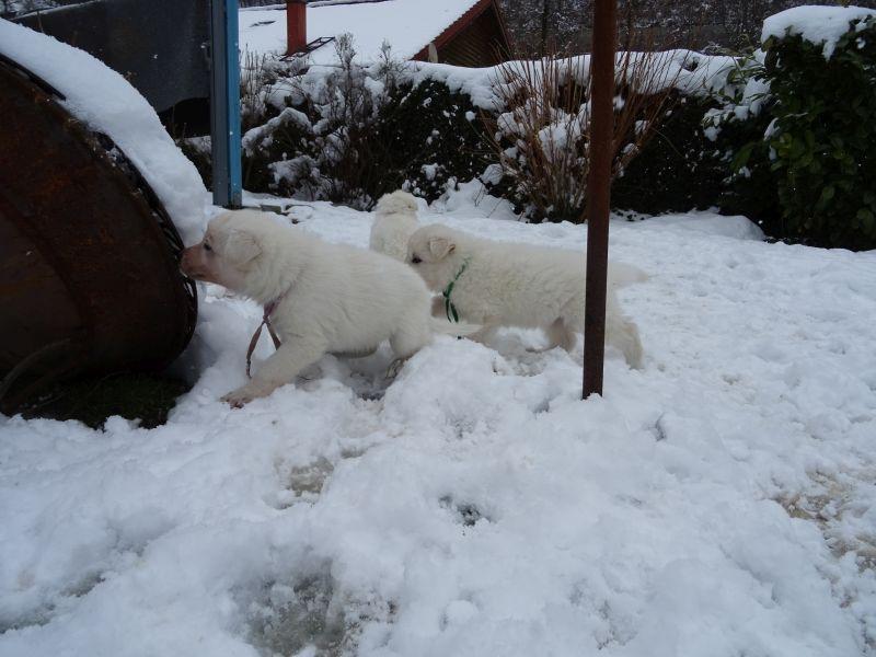 Schnee beschnuppern und kosten...