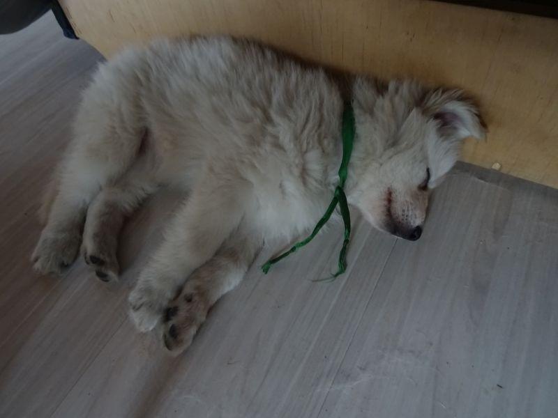 Manila hat sich gerade schlafen gelegt