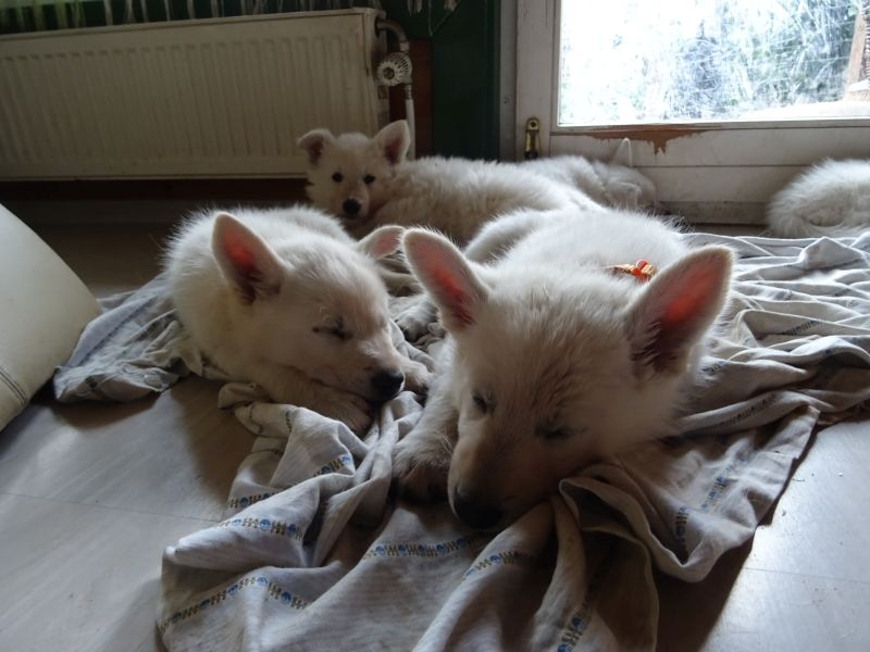 und jetzt sind wir müde und wollen schlafen